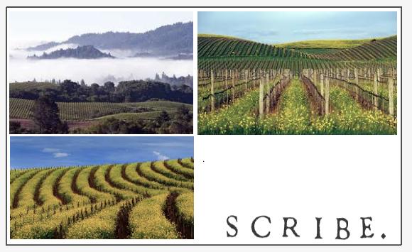 Scribe Pinot Noir Wine Region