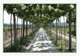 Gateway Vinho Verde Wine